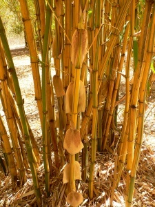 Bamboo in the sun