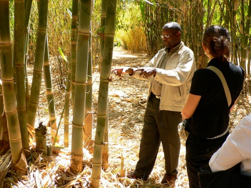 Learning about bamboo in Kenya
